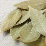 ローリエとは?効果や料理での使い方と代用、乾燥と保存方法!月桂樹まとめ!