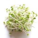 ブロッコリースプラウトとは?栄養と効果効能!量や効果的な食べ方は?