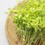 豆苗の栄養と効能効果!加熱調理や生食、食べ過ぎは?効果的な食べ方まで解説!